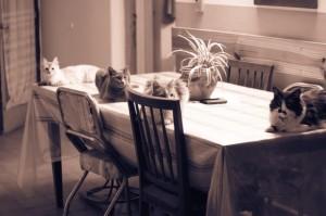 Katzen auf dem Esstisch