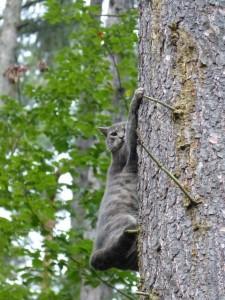 Ganz großer Katzenkratzbaum